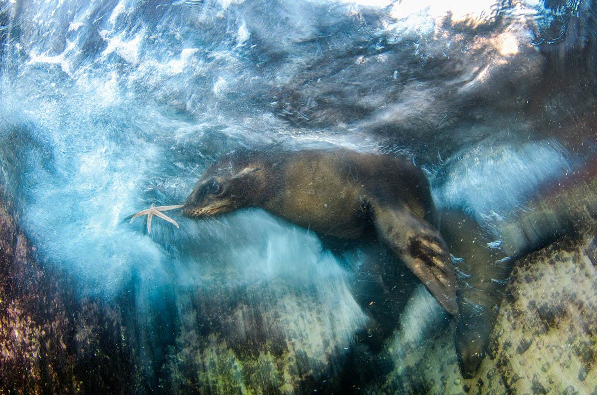 بهترین عکسهای حیاتوحش سال ۲۰۱۶
