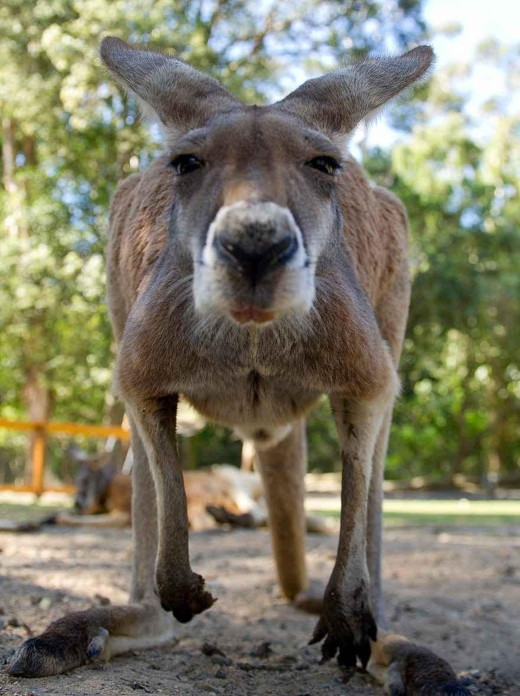 بهترین تصاویر این هفته از حیات وحش جهان