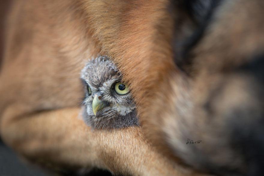 کبوتر با کبوتر سگ با جغد!