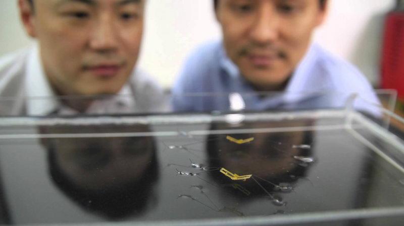 ربات حشرهای که میتواند روی آب راه برود و از سطح آن پرش کند