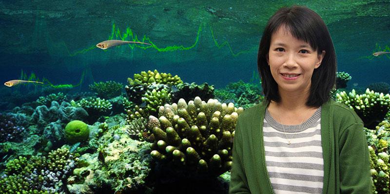 راهکار ماهیها برای تداخلات شبکههای بیسیم