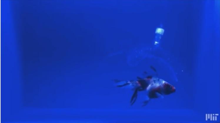 روبات نامریی ماهیان را به آرامی شکار میکند