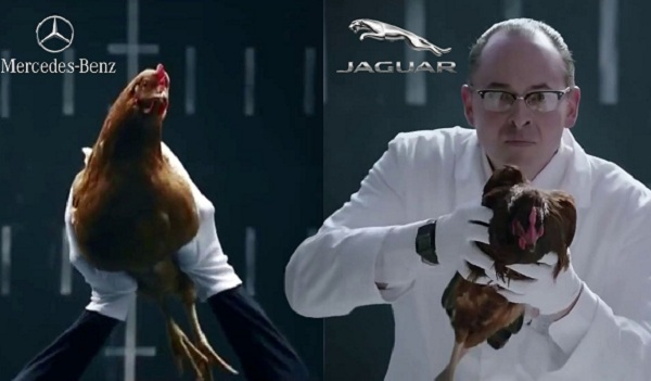 تماشا کنید: گربه جگوار مرغ مرسدس را میخورد و مرسدس گربه را زیر میگیرد!