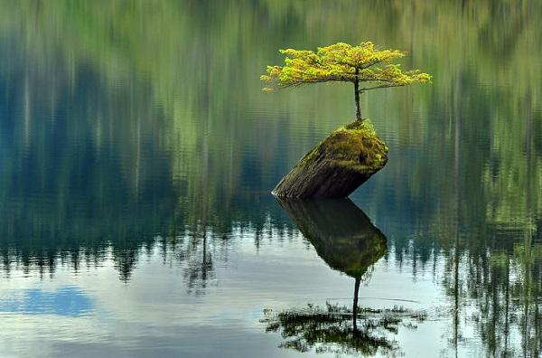 گالری عکس: 10 درخت عجیب که ریشهای شگفتانگیز دارند