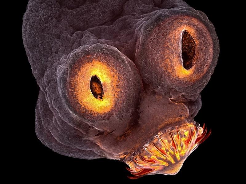 با دیدن این عکسهای عجیب میکروسکوپی با جهانی شگفتانگیز آشنا شوید