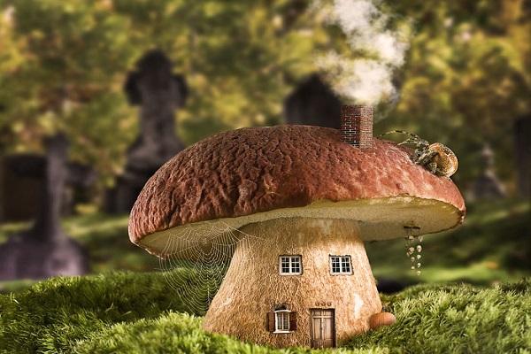 دانش در اشتراک کتاب شد گالری عکس: خانههای فوتوشاپی از جنس لذت! | شبکه