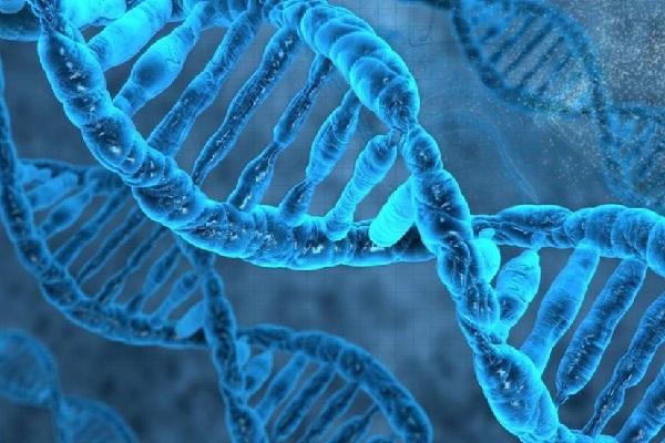 استفاده از روشهای پردازش تصویر برای یافتن توالی ژنی