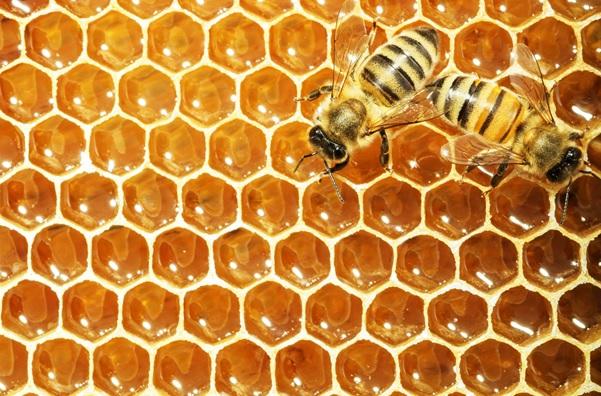 هوش مصنوعی ازدحامی (Swarm Intelligence) چیست؟