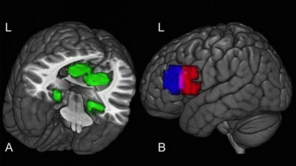 تصویری از مغز درحال شکل دادن به ایدهای نو
