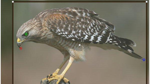 شناسایی پرنده با پردازش تصویر