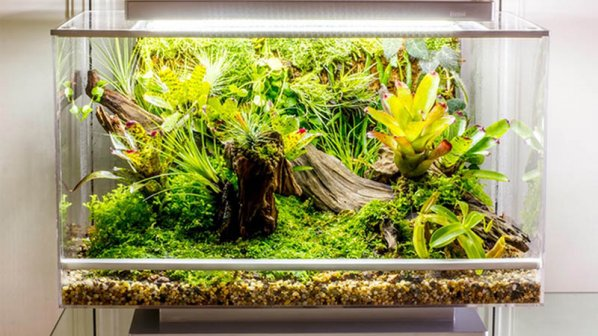 ویدیو: پرورش گیاهان و جانوران در خانه با موبایل