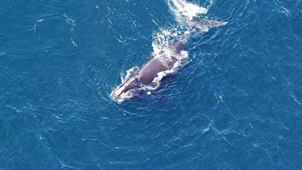نجات نهنگها با بینایی کامپیوتری و پردازش تصویر