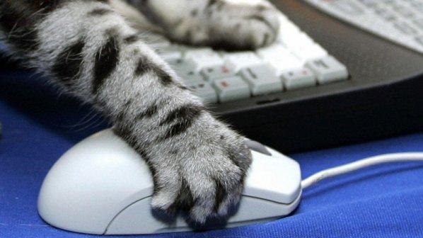 صدای حیوانات را با جستجوی گوگل به کودکان یاد بدهید