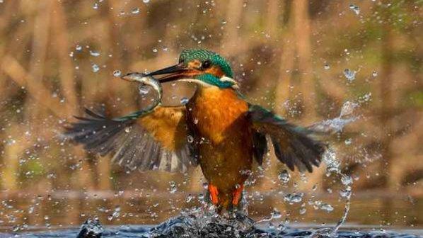 گالری عکس: ۱۲ عکس خارقالعاده از حیوانات در سال ۲۰۱۶