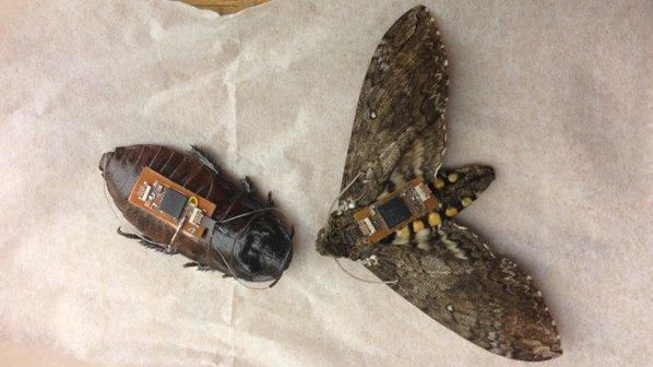 سوسکها و پروانههای نقشهبردار