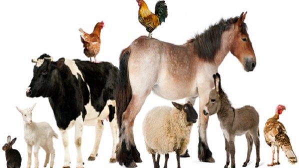 محققان ایرانی دستگاه چندقلوزایی حیوانات را ساختند
