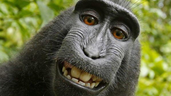 خویشانداز (سلفی) پردردسر یک میمون