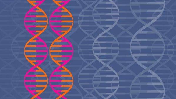 دستکاری ژنتیکی جنین برای جلوگیری از تولد نوزادان معلول و مبتلا به بیماریهای خاص