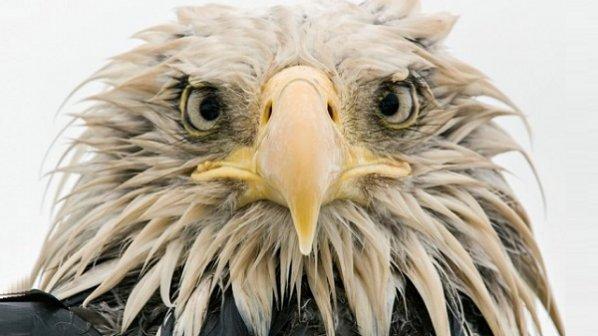 گالری عکس: 13 کاندیدای مسابقه عکاسی حیات وحش 2017