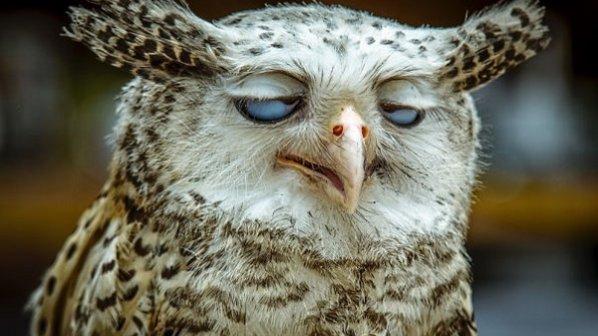 شکار لحظهها! تصاویری عجیب، خندهدار و غیرفوتوژنیک از حیوانات