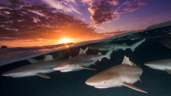 گالری عکس: تصاویر فوقالعاده جذاب از عکاسی زیر آب در مسابقه UPY 2018