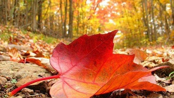 تجربه یک زندگی آفلاین پاییزی