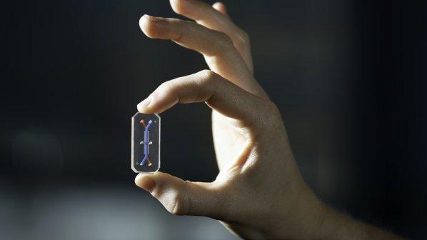 انسان روی تراشه: شبیه سازی، امیدی برای مقابله با کرونا