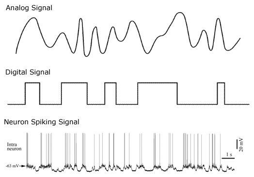 مغز انسان آنالوگ است یا دیجیتال؟