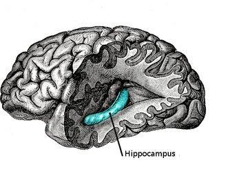 کاشتنی که باعث بهبود تقویت حافظه انسان میشود!