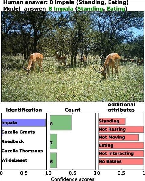 شناسایی و شمارش حیوانات وحشی با کمک هوش مصنوعی
