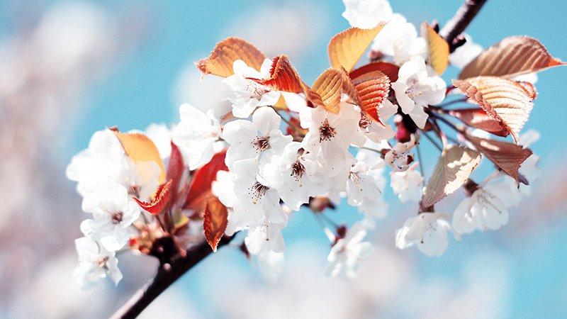 بهار آمد بهار آمد ...