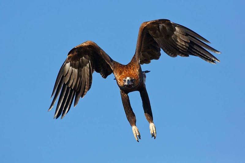 ویدیو: شکار درون توسط عقاب در کسری از ثانیه