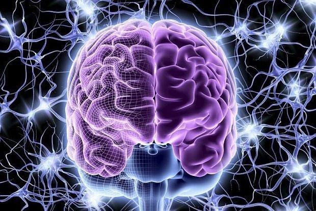 برای اولین بار سلولهای بخش خاکستری مغز به صورت مصنوعی ساخته شدند
