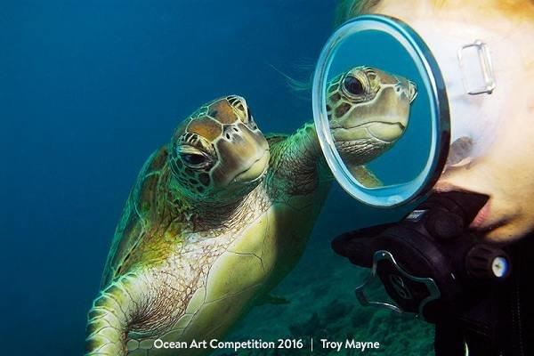 گالری عکس: تصاویری حیرتانگیز از ژرفای آبهای عمیق جهان