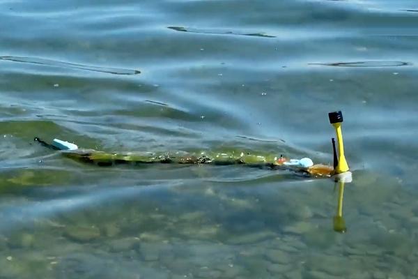 ویدیو: ربات مارماهی در جست و جوی آبهای آلوده