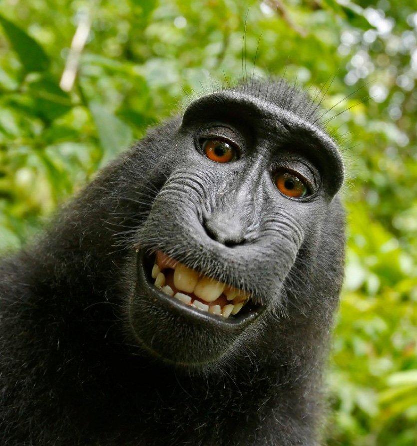 میمون و انسان مصالحه کردند