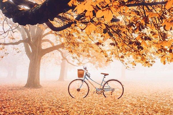 گالری عکس: برگهای خزان را در سراسر جهان تماشا کنید
