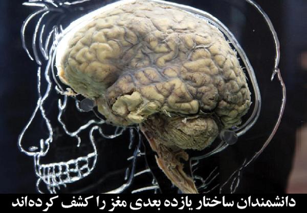 دانشمندان ساختار یازده بعدی مغز را کشف کردهاند