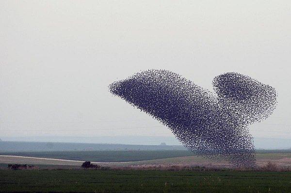 گالری عکس: صحنههای زیبایی که دستههای پرندگان بهوجود میآورند