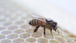 اینتل چگونه جان زنبورهای عسل را نجات میدهد؟
