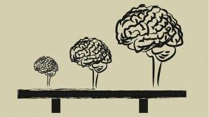 ۱۰ روش اثبات شده رشد مغز از زبان عصبشناسان و نورولوژیستها