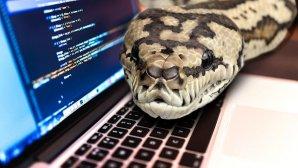 چرا یادگیری پایتون برای برنامهنویسان تازهکار کاملا ایدهآل است؟
