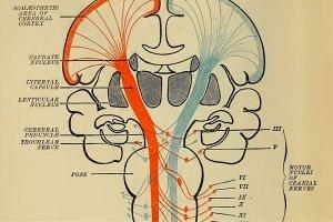 الگوریتمهای یادگیری تقویتی عملکرد مغز را شرح میدهند!