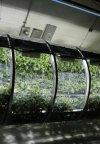 ناسا گلخانه بادی برای مریخ میسازد