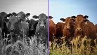 با وبلیکیشن هوشمند Colorize Photos، عکسهای خود را رنگی کنید+نمونه عکس