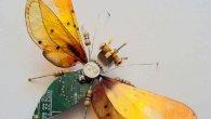 گالری عکس: حشرههای فیلمبردار
