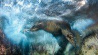 گالری عکس: بهترین عکسهای حیاتوحش سال ۲۰۱۶