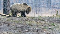 گالری عکس: تماشای لحظات ناب حیات وحش از دریچه دوربین