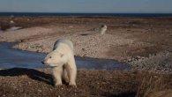 گالری عکس: بهترین تصاویر این هفته از حیات وحش جهان