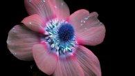 گالری عکس: زیبایی گلها را زیر تابش ماورای بنفش ببینید
